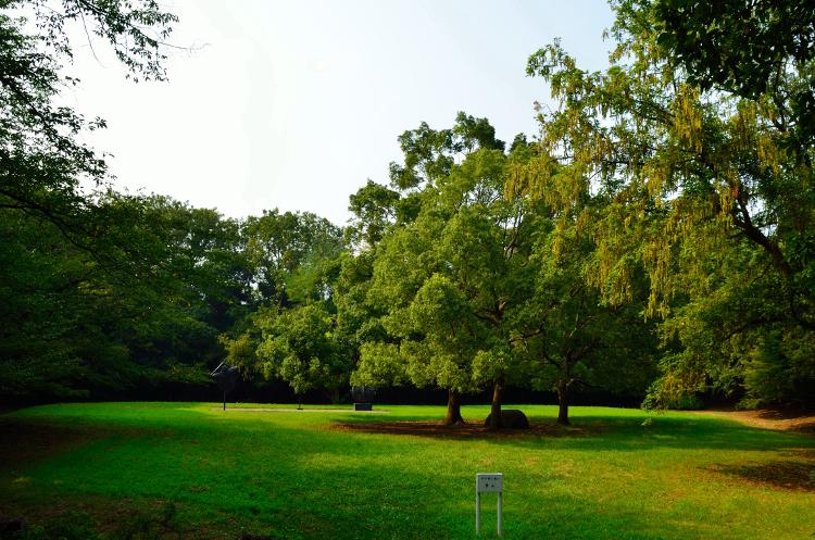 大井ふ頭中央海浜公園なぎさの森