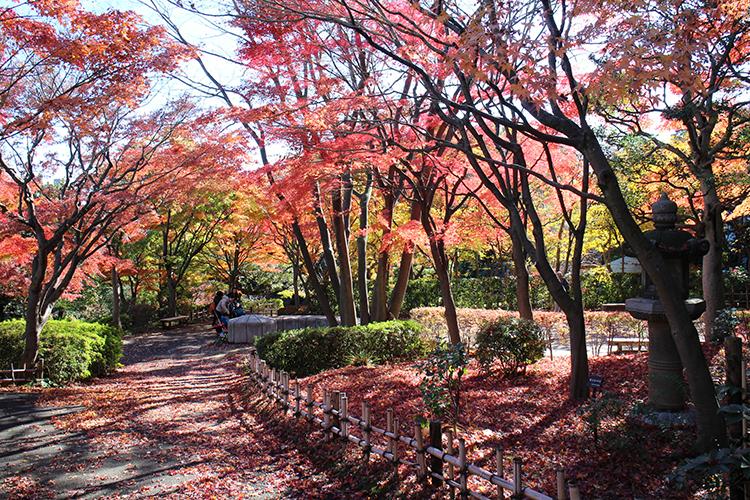 池田山公園紅葉