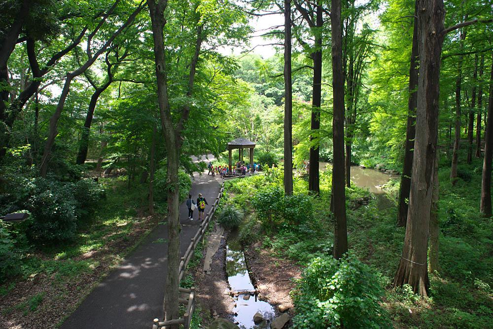 林試の森公園春