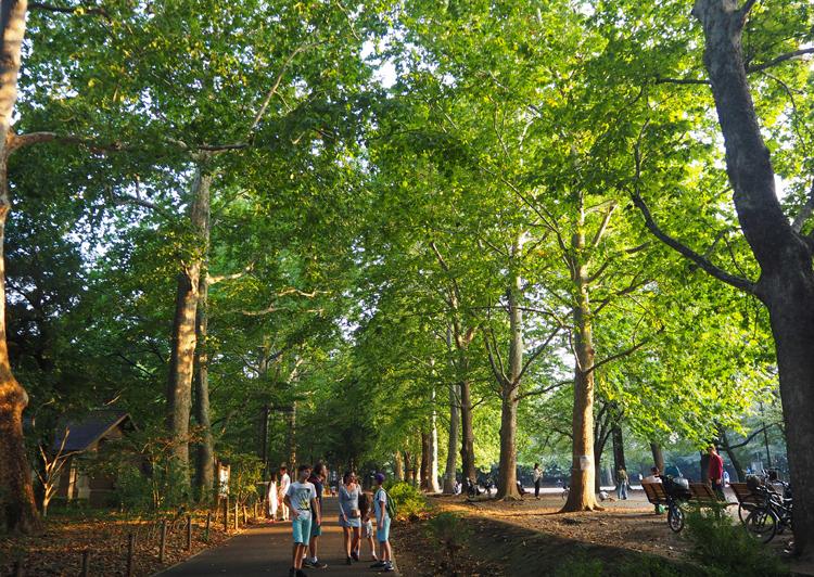 林試の森公園1