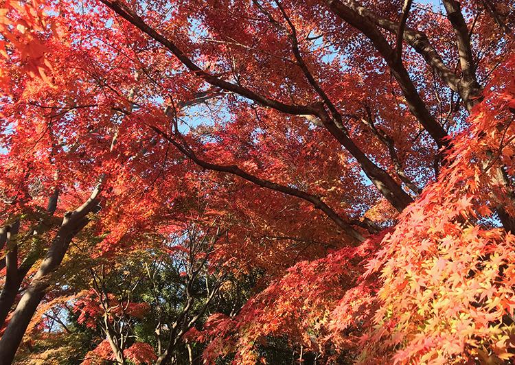 池田山公園紅葉2018