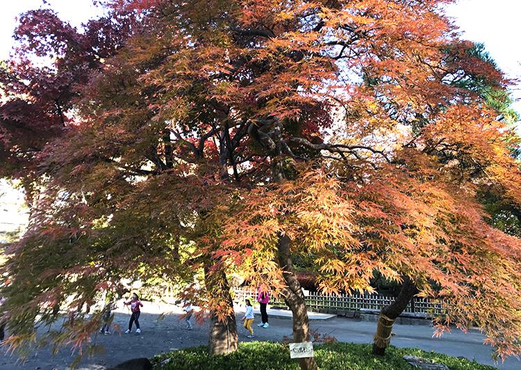 戸越公園紅枝垂れ紅葉