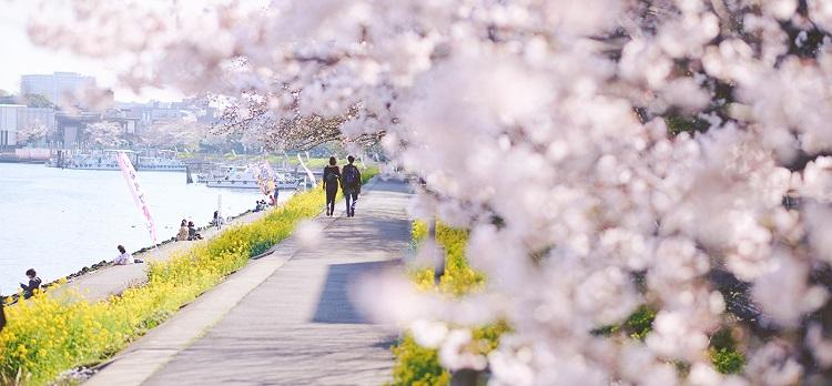 春、水辺の花さんぽ〔勝島運河~八潮〕
