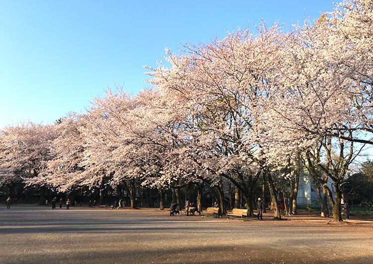 林試の森公園桜20190403