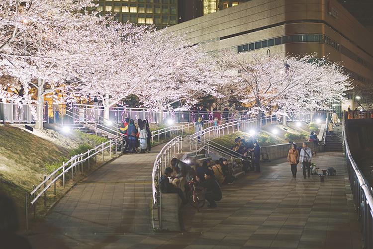 五反田ふれあい水辺広場桜ライトアップ