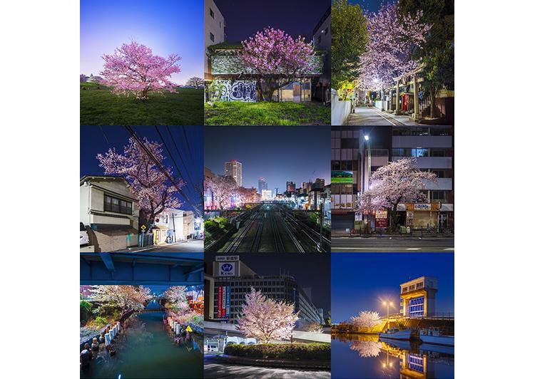 東京野良桜2019