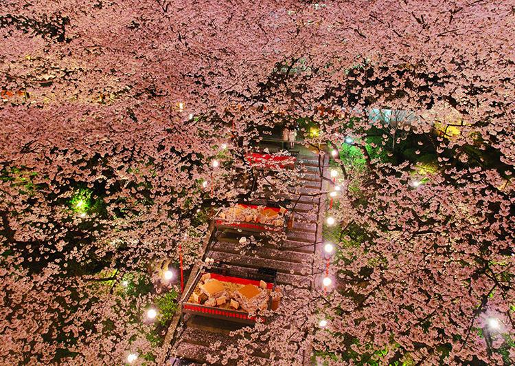 夜桜と桜桟敷席(グランドプリンスホテル高輪)