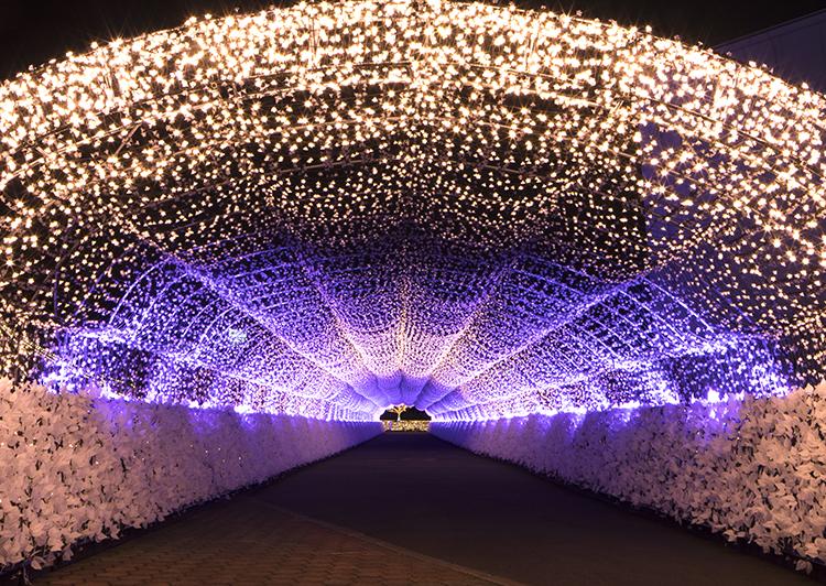 TOKYOMEGAILLUMI江戸桜トンネル