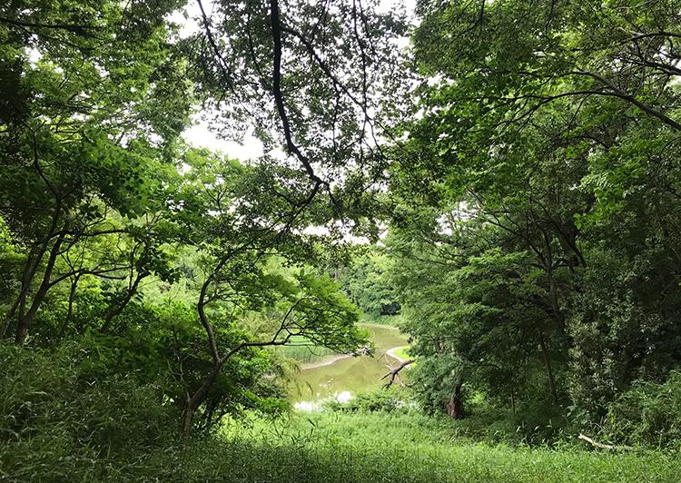なぎさの森自然観察路