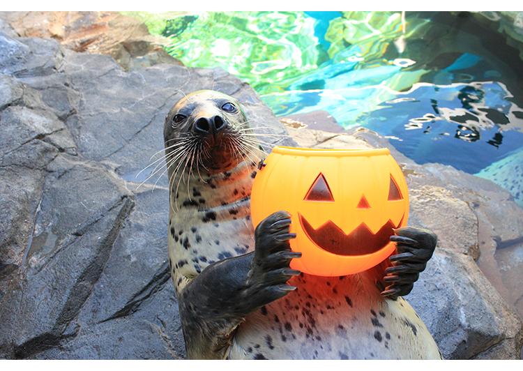 しながわ水族館 ハロウィン