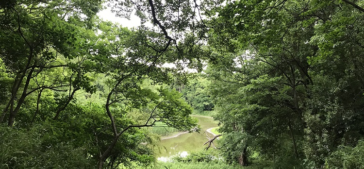 水辺の自然を満喫!都会のオアシス 八潮で森林浴 (約4km)