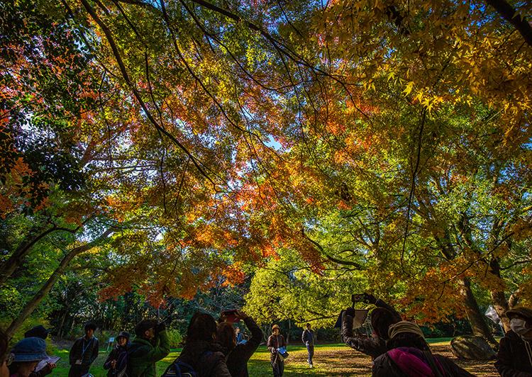 大井ふ頭中央海浜公園彫刻広場の紅葉
