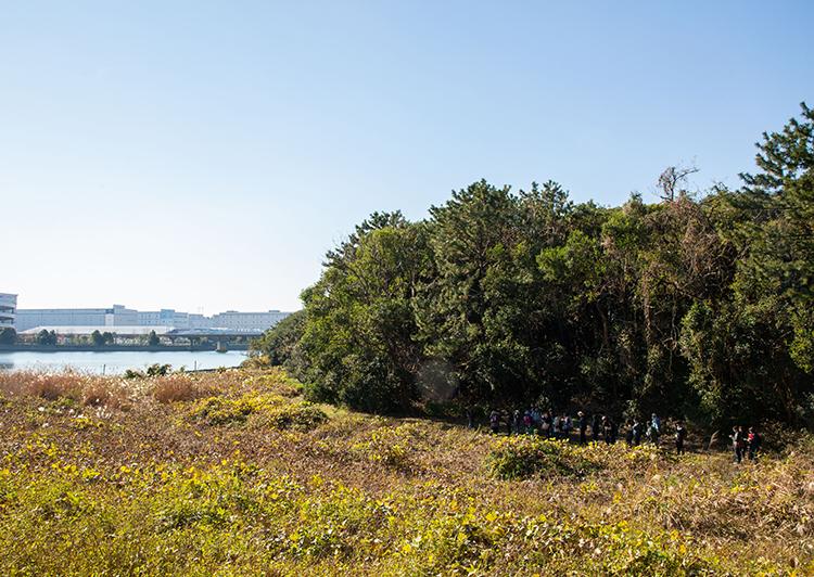 大井ふ頭海浜中央公園干潟